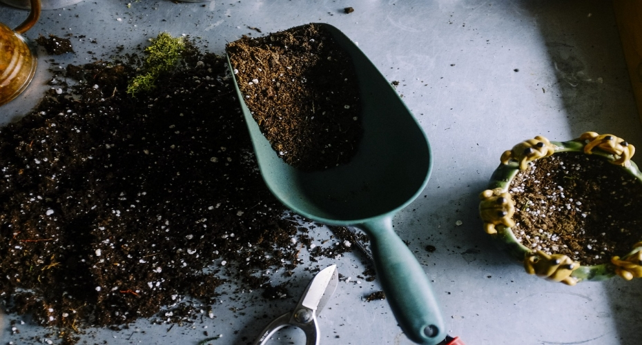 Autumn Gardening: How To Get It Right