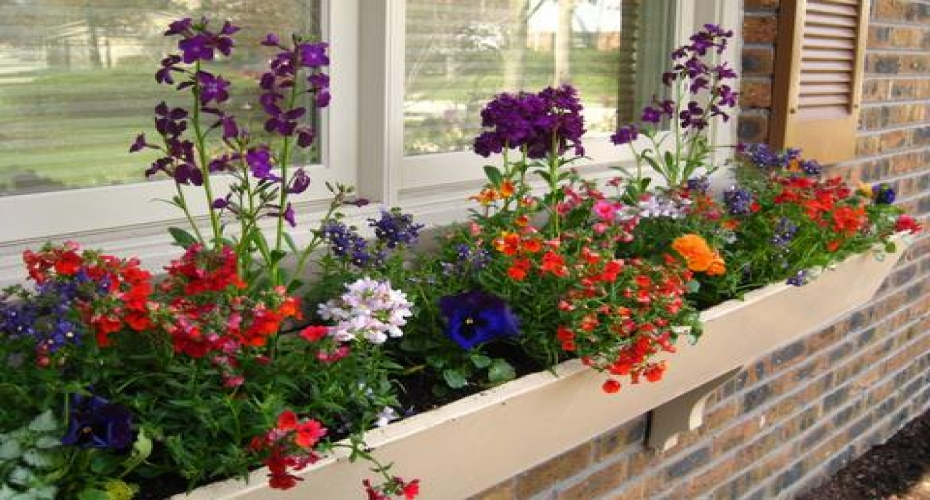Make the most of limited garden space
