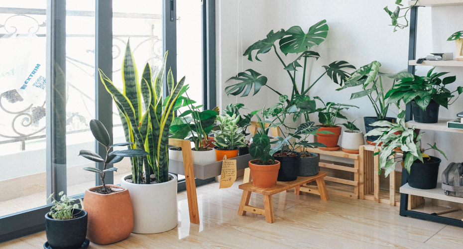 7 Ways Plants Can Relax Your Mind